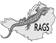 Reptile and Amphibian Group for Somerset logo